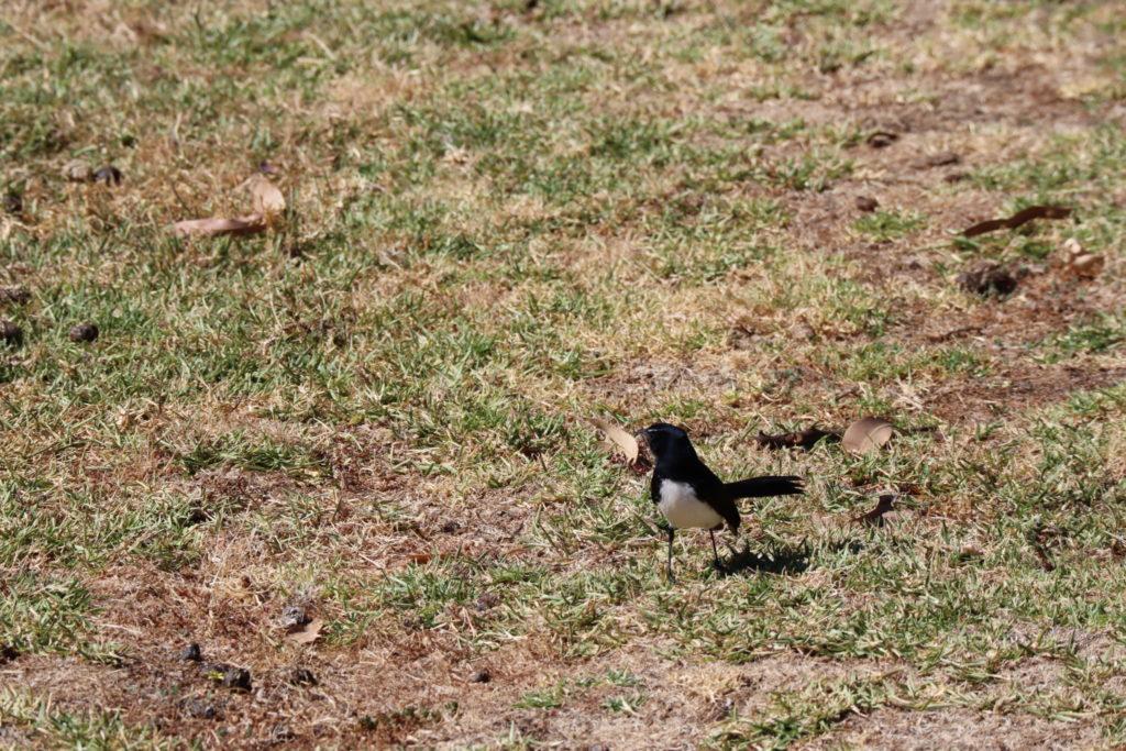 黒い鳥さん