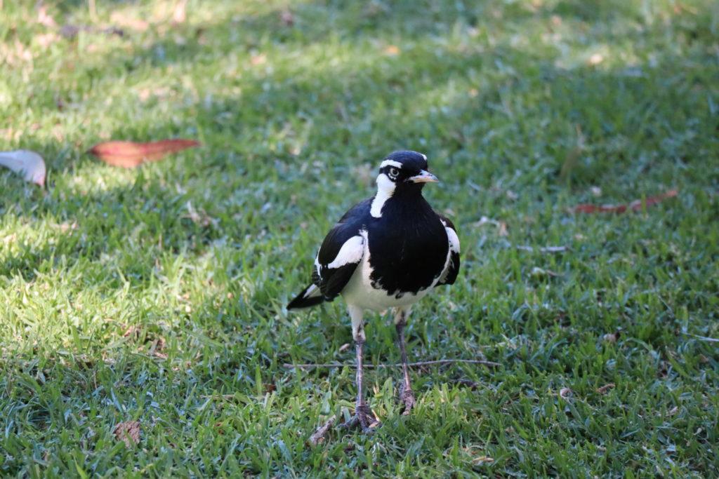 白黒の鳥さん