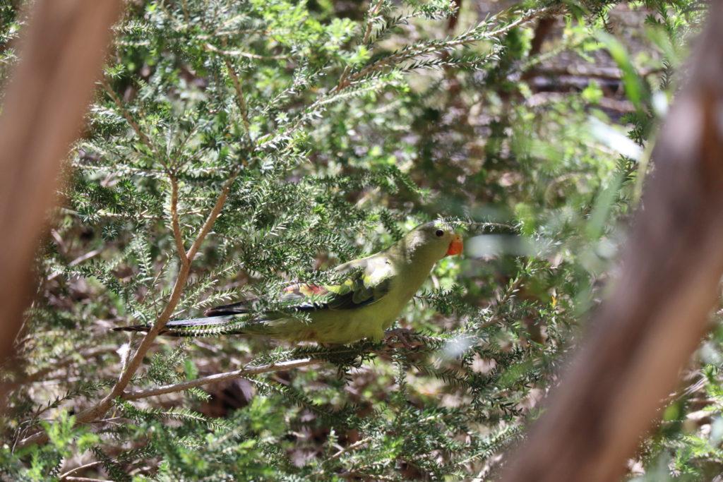 緑の鳥さん2