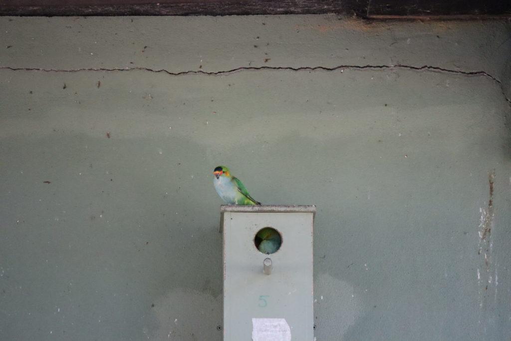 緑の鳥さん3