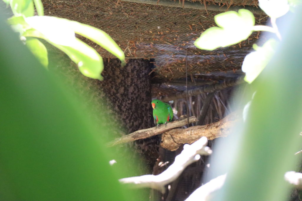 緑の鳥さん