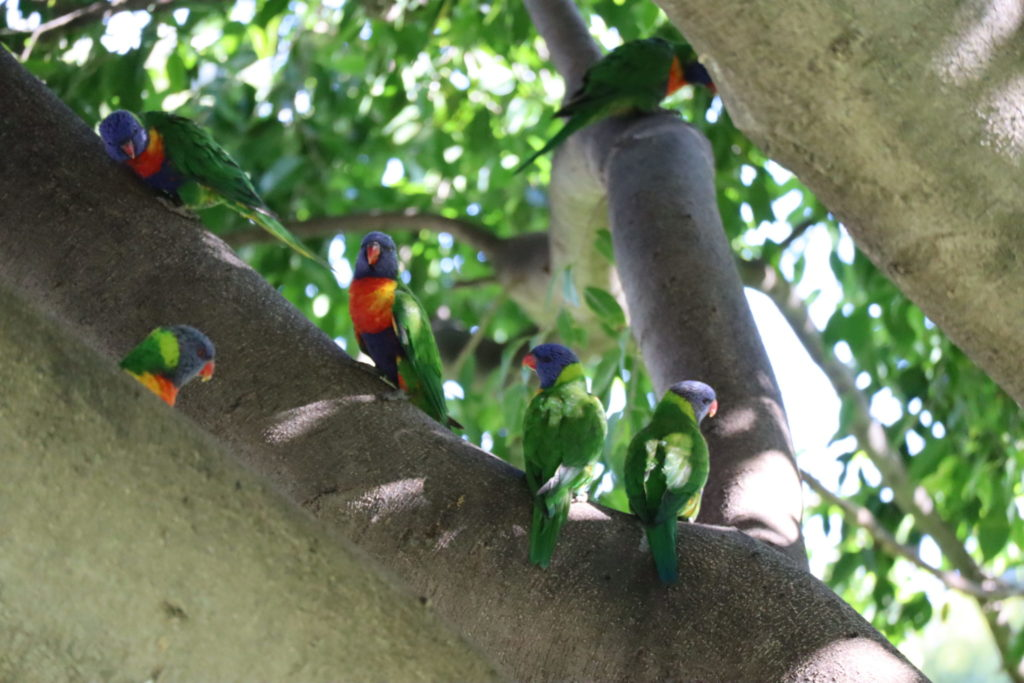木の上で群れるゴシキセイガイインコ